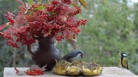 Fåglar som pickar solrosfrö från solrosen, som är på tabellen i trädgården arkivfilmer