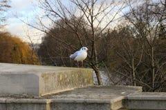 Fåglar som placerar på ett staket vid floden Royaltyfri Bild