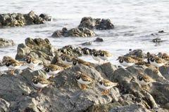 Fåglar som placerar på thkostnad av Indiska oceanen Arkivfoton
