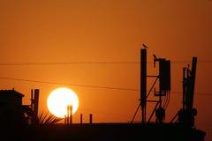 Fåglar som ser soluppgång Royaltyfri Foto