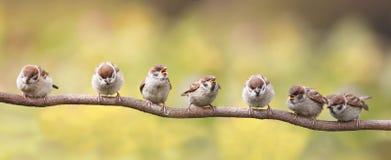 fåglar som sitter på en rolig filial, öppnade deras näbb i förväntan av föräldrarna Royaltyfri Bild