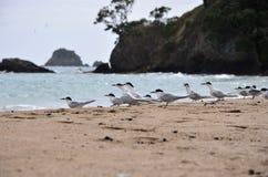Fåglar som sitter på stranden Arkivbild
