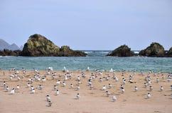 Fåglar som sitter på stranden Royaltyfri Fotografi