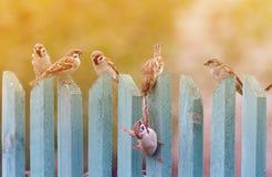Fåglar som spelar bullersamt på ett gammalt trästaket royaltyfri foto