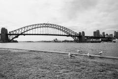 Fåglar som stirrar på Sydney Harbor Bridge och operahuset Royaltyfri Foto