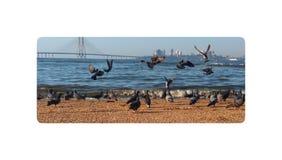 Fåglar spelar nära havsstranden med vågorna av vatten arkivbilder