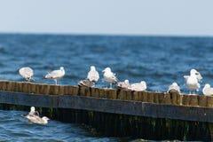Fåglar sporrar på arkivfoto