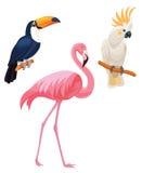 fåglar ställde in tropiskt Arkivbilder