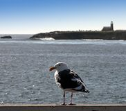 Fåglar synar beskådar Arkivbilder