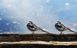 fåglar två Fotografering för Bildbyråer
