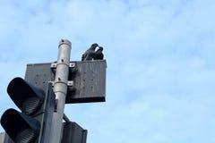 fåglar två Arkivfoto