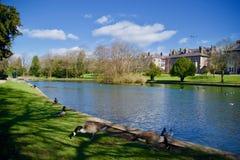 Fåglar vid sjön royaltyfri fotografi