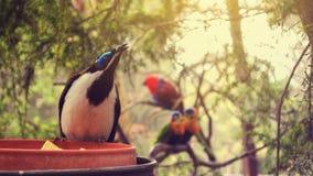 Fåglarna Royaltyfria Foton