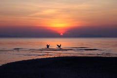 Fåglarna flyger med solnedgång nära stranden Arkivfoton