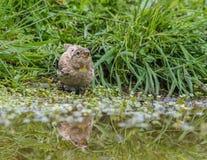 Fåglarna meddelar våren Arkivbilder