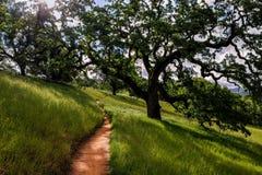 Fållaslinga, Henry Coe State Park Arkivfoton