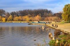 Fånga av fiskfiskare på en lake i höst arkivfoton