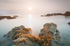 Fånga det första ljuset | HavsväxtPandak strand Royaltyfri Bild