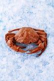 fånga krabbor is Royaltyfria Bilder