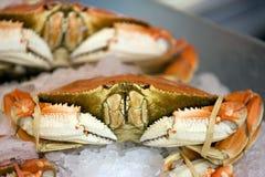 fånga krabbor dungenessen arkivfoton
