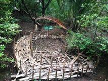 Fånga krabbor huset i mangroveskog på Rayong, Thailand Arkivbilder