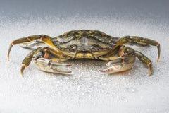 Fånga krabbor, modernt, kräftdjurst, jordluckraren, skaldjur, mat, studio, Arkivbilder