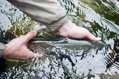 Fånga och frigör: fiskar svanen Royaltyfria Bilder