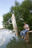 fångad fisk royaltyfria foton