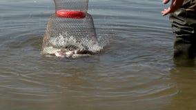 Fångad fisk i bur på flodvatten under sommarfiske lager videofilmer
