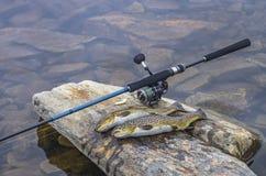 Fångad fisk och fångstredskap för brun forell på flodstenen fotografering för bildbyråer