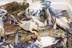 fångad krabba nytt arkivbilder