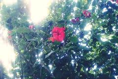 Fångade härliga blommor arkivfoton
