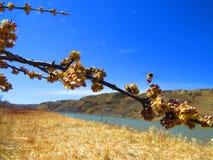 Fångade inte pollenet Arkivbild
