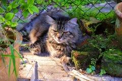 Fångade min Cat At The Small Garden att vila under The Sun arkivbilder