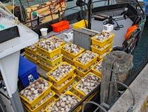 Fångade nytt skaldjur som packades in i gula plast- behållare royaltyfri bild