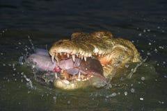 fångande fisk Royaltyfri Fotografi