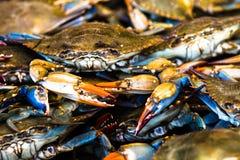 fångar krabbor nytt Royaltyfri Bild