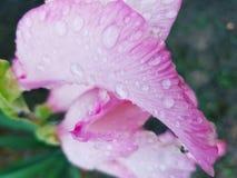 Fångat i blom Arkivbild