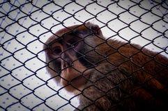 Fångat i en bur Royaltyfria Foton