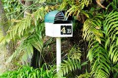 fången post ve dig Ask för bokstav för brevlådabrevlådabrevlåda som omges av gröna ormbunkar med postskräpreklam Arkivfoto