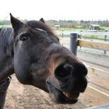 Fånig häst Royaltyfri Fotografi