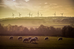Får för turbiner för vindlantgård Backlit horisont på solnedgången Royaltyfria Bilder