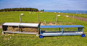 Får Hay Feeder på kullelantgård i England Arkivbilder