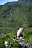 Får i Snowdonia royaltyfri fotografi