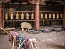 Får i tibetana Monastary arkivfoto