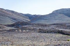 får med herdar på berglandskap arkivbilder