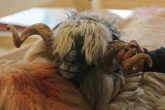 Får med stora krullade horn Fotografering för Bildbyråer