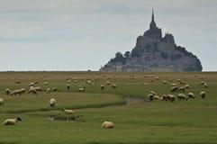 Får närliggande Mont Sanktt Michel Fotografering för Bildbyråer