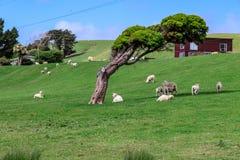 Får och träd - Ovelhas e à ¡ rvore arkivbild
