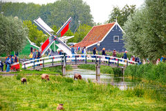 Får och väderkvarnar i Zaandam royaltyfri foto